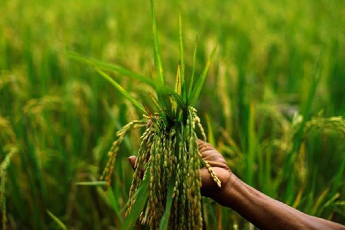 Zaid crops sowing up 16.49 pc so far this year: Govt